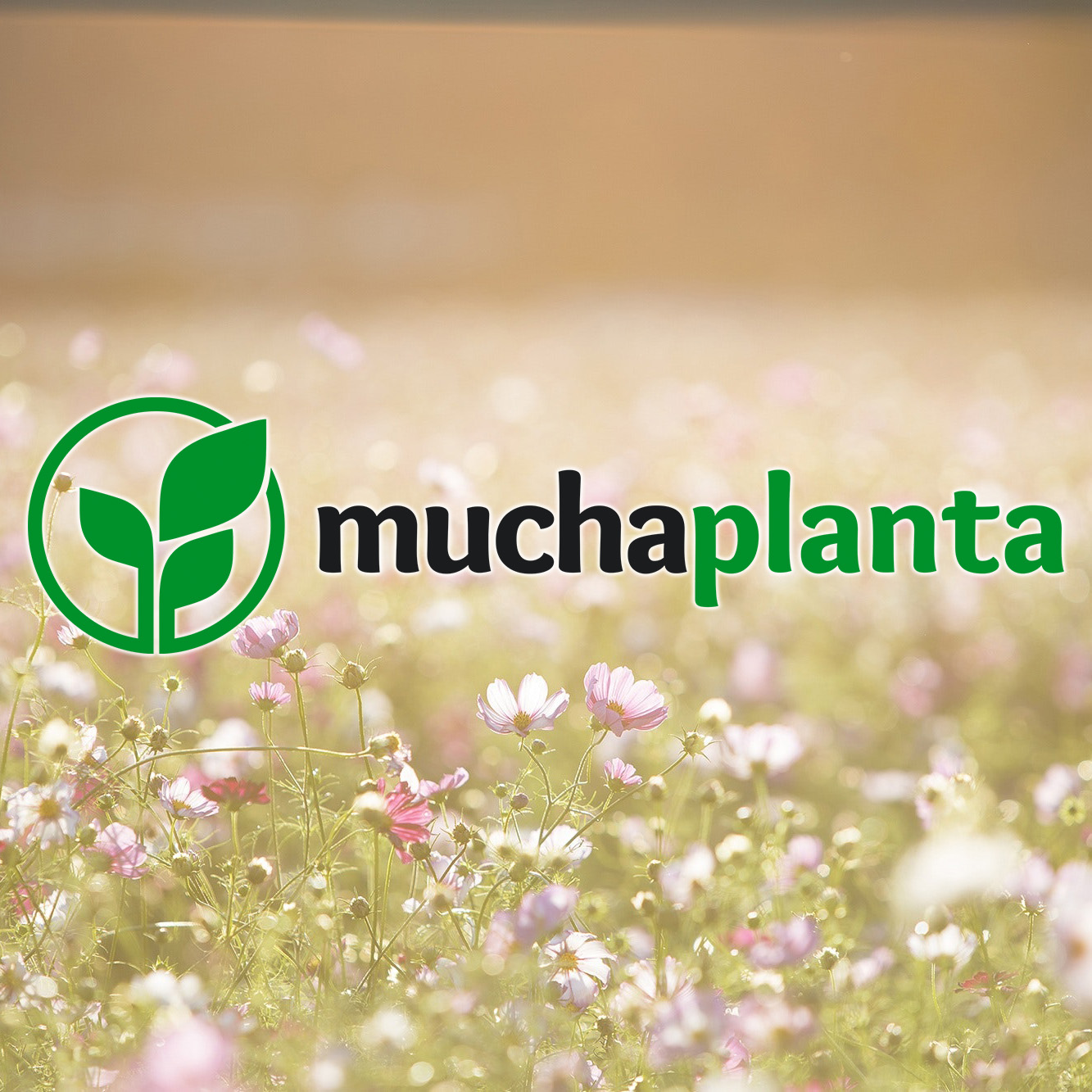 MuchaPlanta